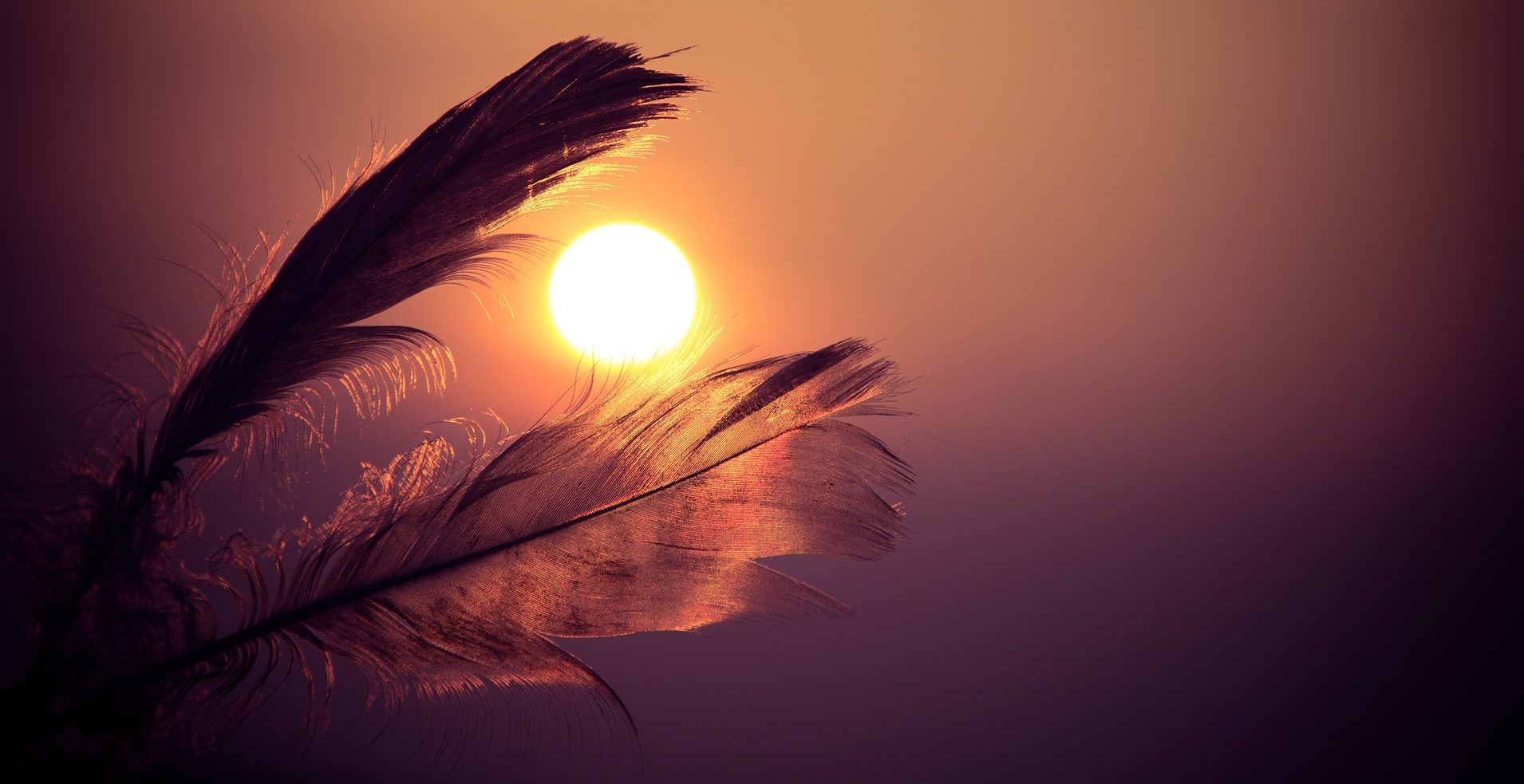 feathers-933657_1920